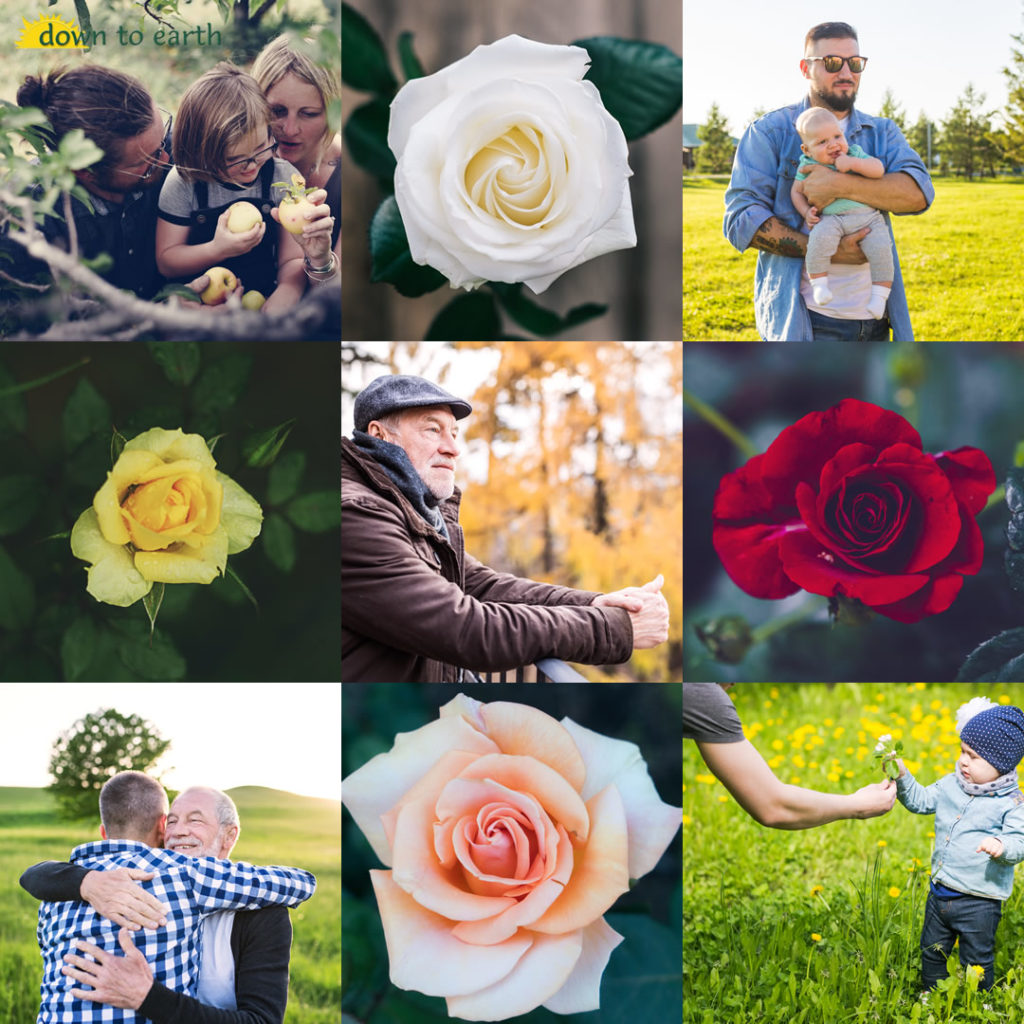 This Father's Day, Plant a Tree or Rose for Dad