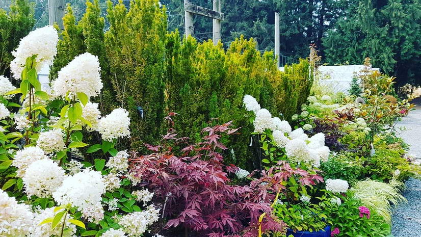 Local Victoria Westshore Garden Tour, Saturday, July 6th, 2019